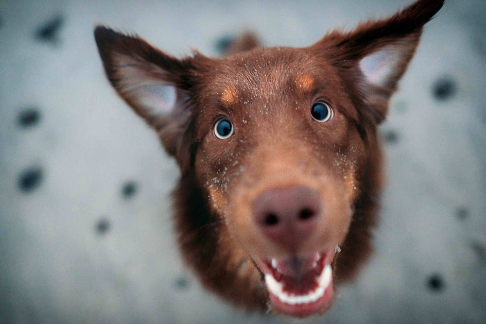 Hund Nassfutter